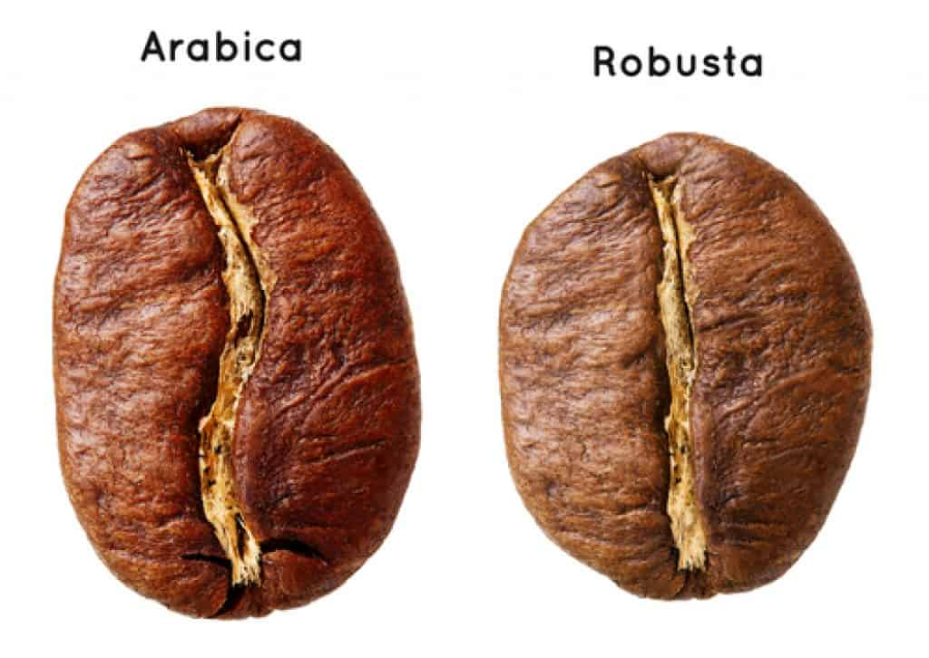 Black Arabika and Robusta